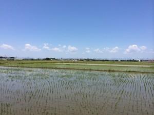 見事な田園風景ですよね!