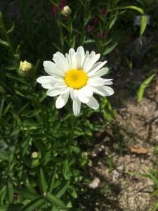 磐田営業所のお花です