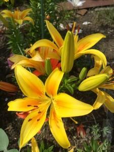 磐田営業所に咲いたお花です