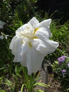 磐田営業所に咲くお花たち
