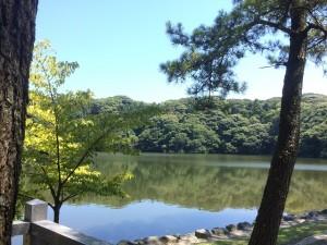 池宮神社より桜ヶ池の方向を撮影